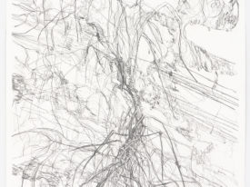 Mapping my surroundings-Oleander & lightlines